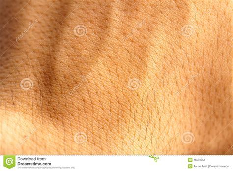 human skin texture royalty free stock images image 6094039 royalty free stock images skin human texture image 16531059