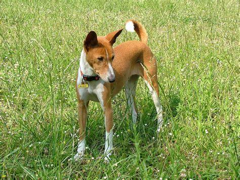 low dander dogs the 13 best hypoallergenic breeds rover