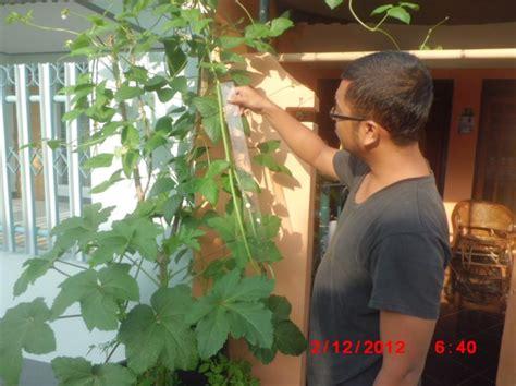Pot Tanaman Dan Bunga Panjang Sgp cara menanam kacang panjang dalam polybag atau pot bibitbunga