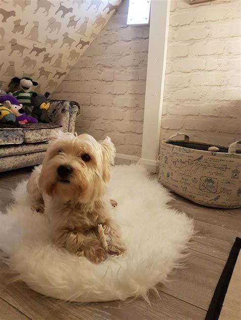 chambre pour chien best chambre pour chien pictures design trends 2017