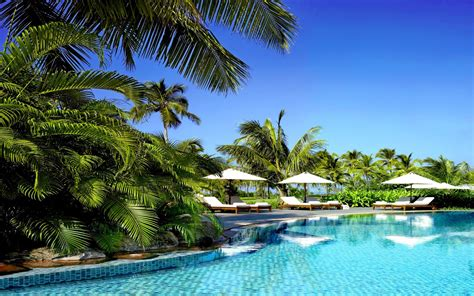 palm trees swimming pools tropical wallpaper