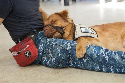 veteran dogs heroes saved service dogs rescue veterans from mental illness pressreleasepoint