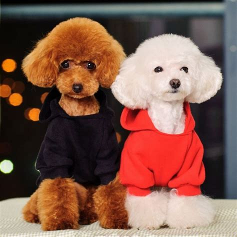 miniature french poodle hairstyles 25 best images about hachi on pinterest pets toy