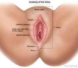 Opening inner and outer lips of the vagina and the vaginal opening