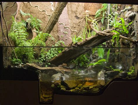 Aquascape Ideas Tropical پالوداریوم