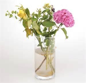 Aspirin In Flower Vases by Does Aspirin Help Plants Grow Aspirin Uses In Garden For