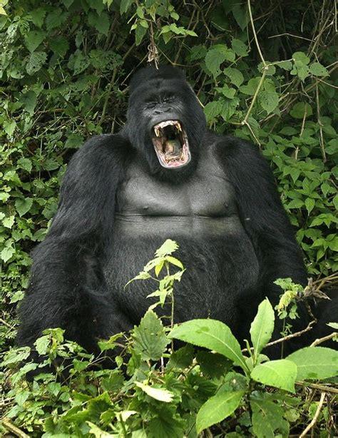 Photos: Among World's Most Endangered Animals | Animals ...