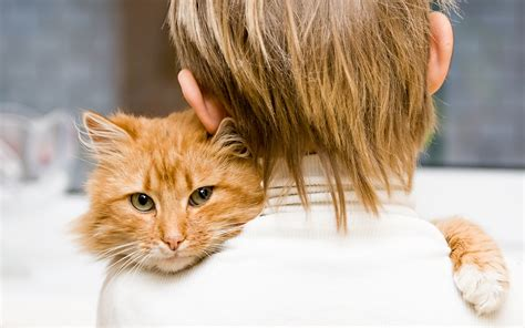 cat hugging cat hugging the owner wallpapers and images wallpapers pictures photos