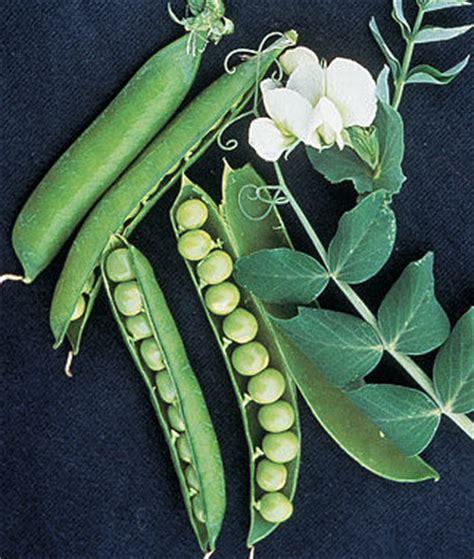 garden sweet pea seeds  plants vegetable seeds