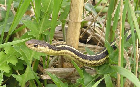 how to find snakes in your backyard god is our refuge revisited from the inside out
