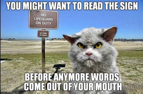 Cat Memes 2018 - funny cat memes funny memes