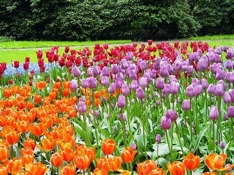 imagenes jardines keukenhof keukenhof wikipedia la enciclopedia libre