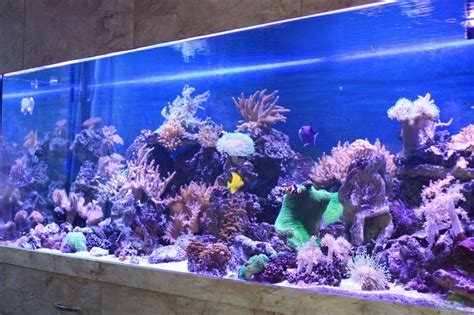 120 liter meerwasseraquarium einrichtungsbeispiele f 252 r meerwasser aquarien