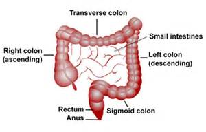 the abc s of chronic constipation aka ibs c page 4