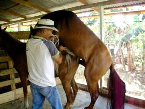 Potros Cojiendo Yeguas | venta de caballos potros yeguas y accesorios review ebooks