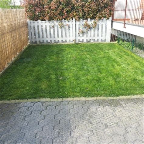 costo tappeto erboso prato a rotoli vantaggi costi e idee habitissimo