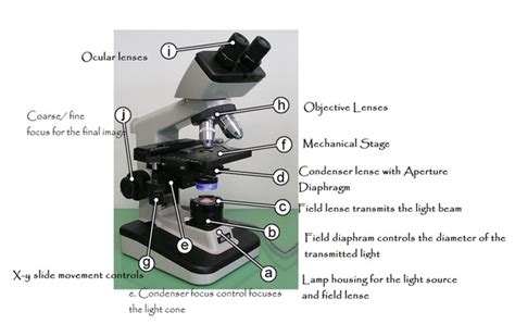 light source microscope function microscope light source tips for fungi identification