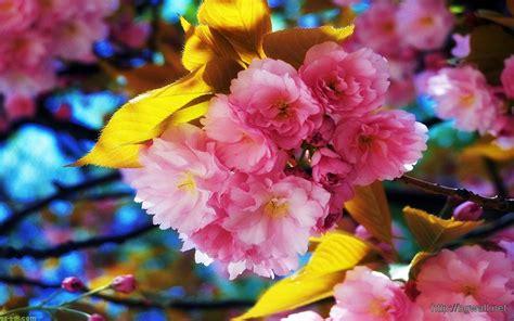 cute hd wallpaper of flowers cute pink flower wallpaper hd background wallpaper hd