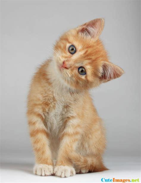 swings katze confused kitten kittens cuteimages net