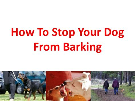 how to get dog to stop barking how to stop your dog from barking