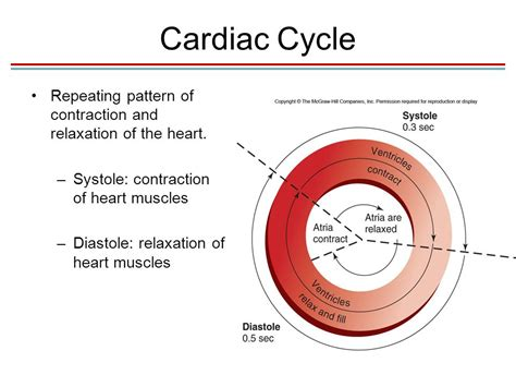pattern of heart contraction chapter 13 blood heart and circulation lecture