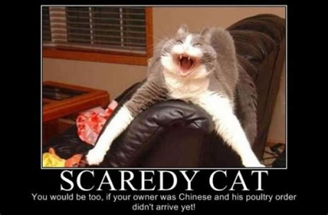 Funny Scary Memes - tagged with cats meme scary