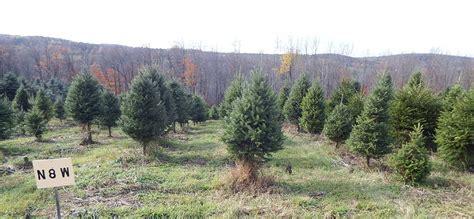 100 christmas tree baler for sale christmas tree
