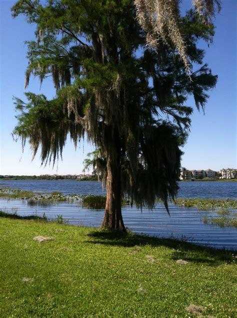 Apartments Orlando Turkey Lake Turkey Lake Park Orlando Florida Beautiful Florida