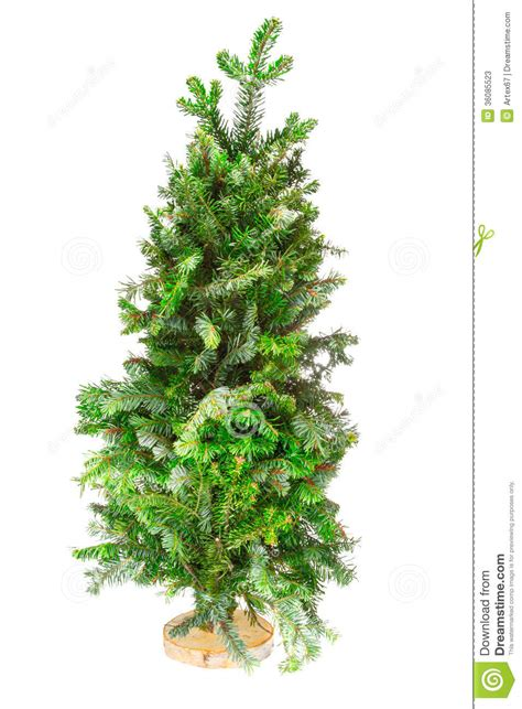 christmas tree too small for stand small tree tree on a stand stock photos image 36085523