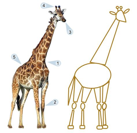 how to draw a giraffe doodle giraffe drawing lesson