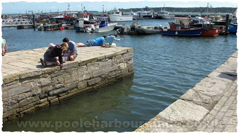 fishing boat hire swanage poole quay crabbing and fishing for crabs in poole