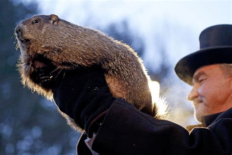 groundhog day celebration it s deja vu all again phil sees his shadow