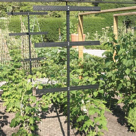 Small Plant Supports by Raspberry Protection And Support Frame Harrod