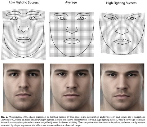 circular heads and high cheekbones fwhr modulates high fighting success and high