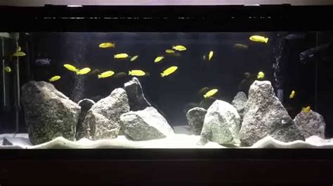 cichlid aquascape new lake malawi mbuna fish tank how to aquascape mbuna