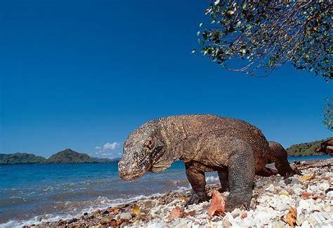 informasi terlengkap keindahan pulau komodo