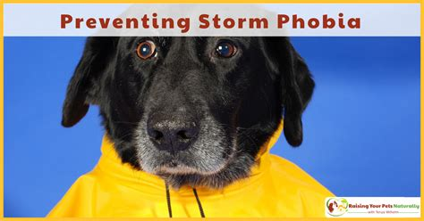 puppy scared of me scared of storms archives raising your pets naturally with tonya wilhelm