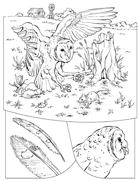 barn owl coloring page az coloring pages