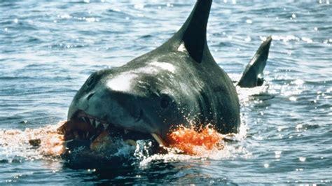best shark attack top 7 worst shark attacks in history