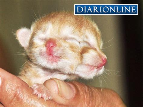 vendo ladario gato nasce duas cabe 231 as em lad 225 correio do estado