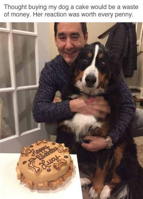 Birthday Cake Dog Meme - bought my dog a cake meme meme collection