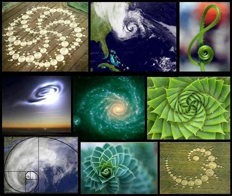 patterns throughout nature fibonacci patterns throughout nature