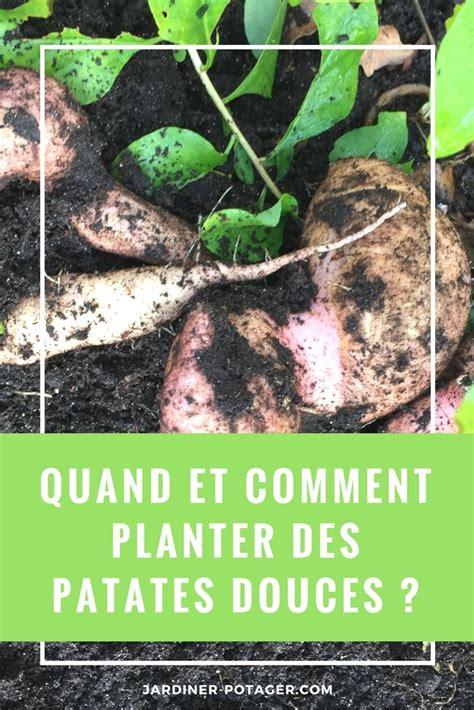 Quand Planter Les Patates Douces by Les 25 Meilleures Id 233 Es De La Cat 233 Gorie Jardin Sec Sur