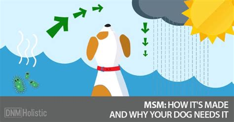 how its made dogs msm does your need it dogs naturally magazine