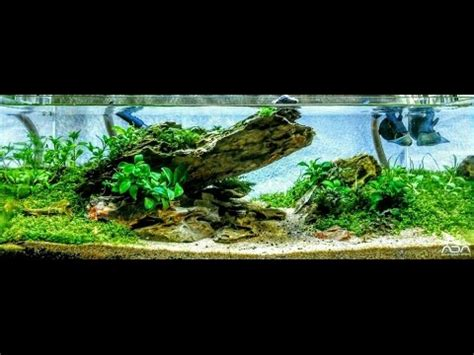 Aquascape Ada by Low Tech Ada 45f 4 2 Gallon Aquascape Step By Step Outside