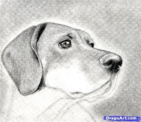 imagenes foto realistas dibujos de animales reales buscar con google gabriela