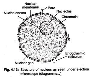 main components   animal cell