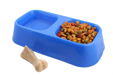 healthy food for puppies list of the healthiest dogs breeds picture