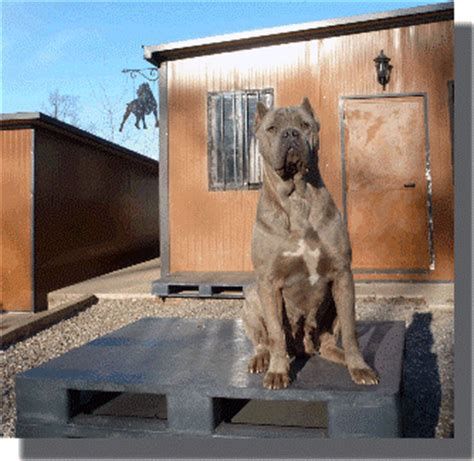 pedane per cani pedane per canili pedana canile 100x120 h15