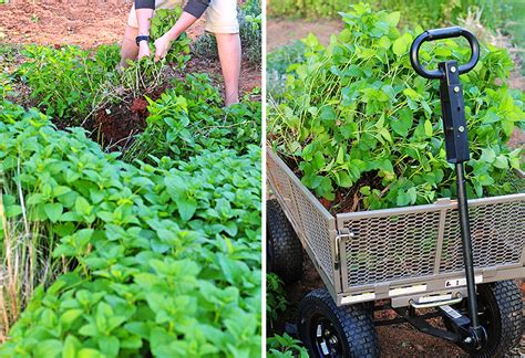planning what to grow in your backyard vegetable garden